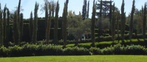 Bosque Madrid