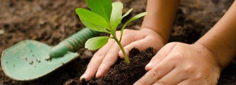 Agroecologia-para-CrianA_as-2-800x445