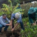 Bogotá prevé plantar 300.000 nuevos árboles este año