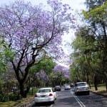 Ciudad de México plantará 10 millones de árboles para mejorar sus condiciones ambientales
