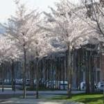 Madrid, reconocida 'Ciudad arbórea del mundo 2019' por la FAO y la Fundación Arbor Day